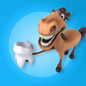 Hevosten hammashoitola